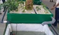 Aquaponics Live Demonstration - 29 & 30 septembre 2018